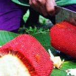 manfaat buah merah papua 03
