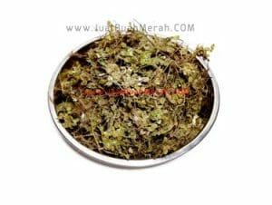 cara menggunakan rumput kebar papua