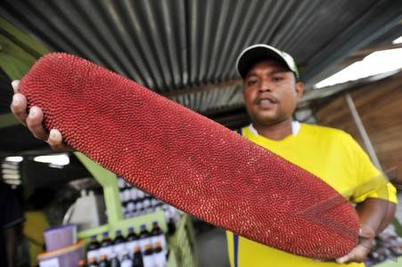 Khasiat Dan Manfaat Buah Merah Oil Papua