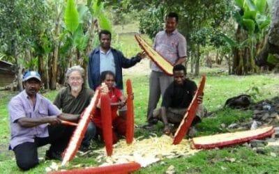 Khasiat dan Manfaat Buah Merah Papua