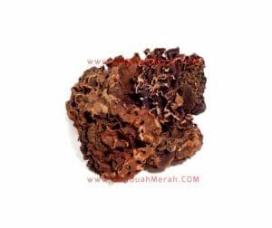 manfaat sarang semut merah