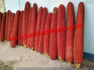 buah merah papua obat asam urat