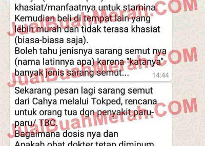 Jual Buah Merah OLX Indonesia