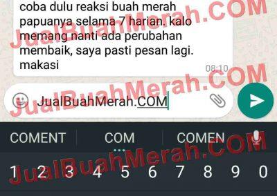 Jual Buah Merah Papua Blanja.com