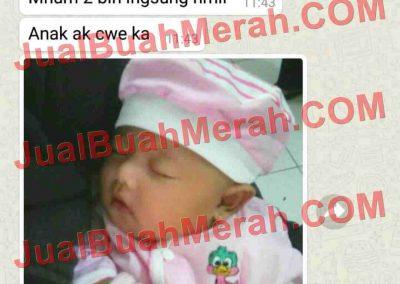 Jual Buah Merah Papua Jd.id