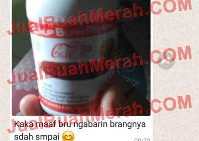 Jual Buah Merah Papua Jualo.com