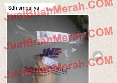 Jual Buah Merah Papua OLX.com
