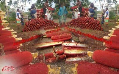 Getah Buah Merah Papua dan Manfaatnya Untuk Herbal